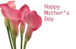 Happy Mothers Day - Pink Lillies