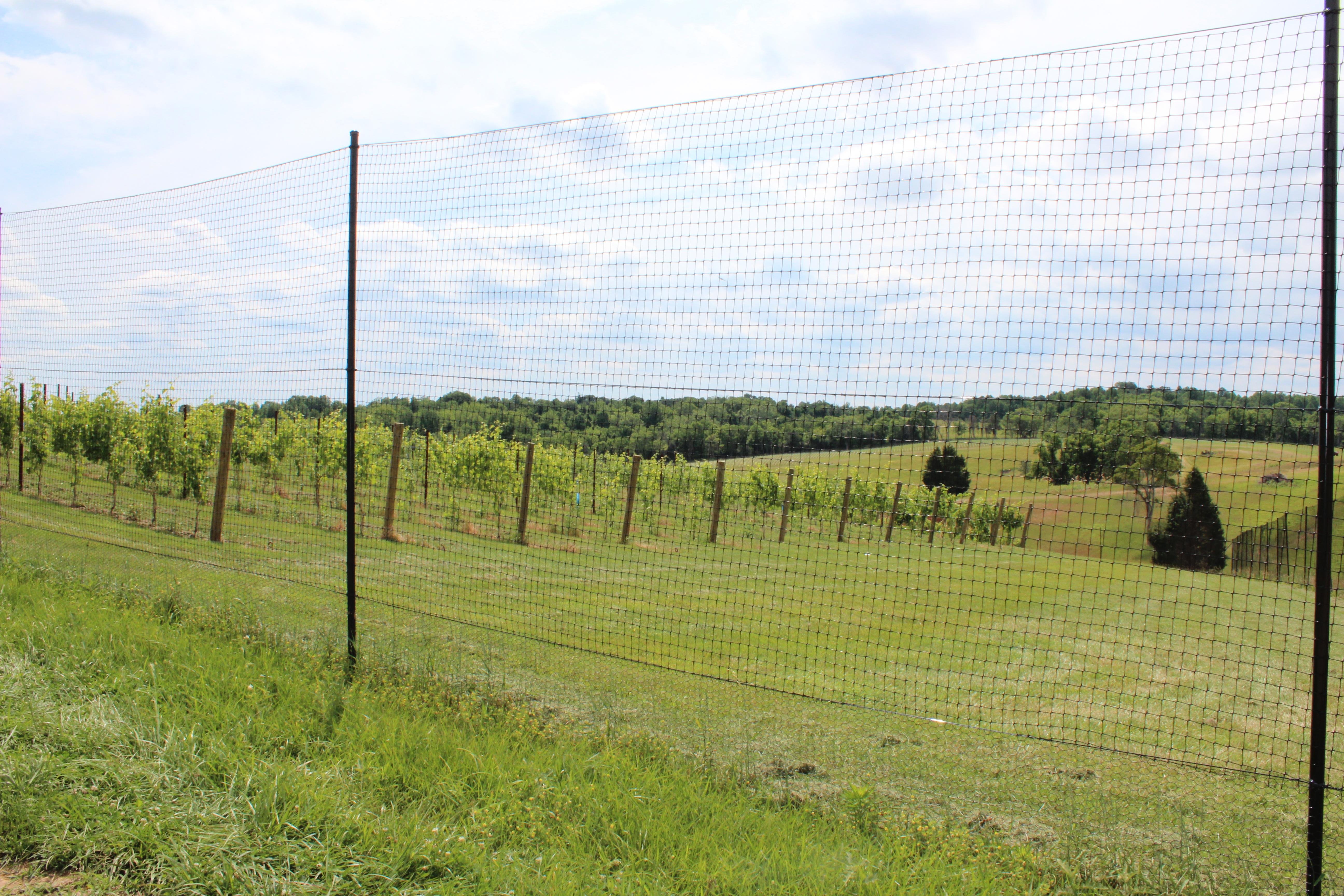 Deer Fencing Deer Behavior And Poly Fence