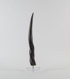 Eland Horn on Acrylic Base
