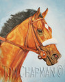 Barbaro, the Look of a Champion - horseracing giclee canvas print