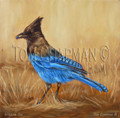 Camp Robber, Stellar's Jay - oil painting on canvas