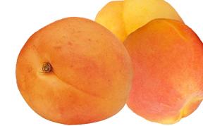 apricot-icon.jpg