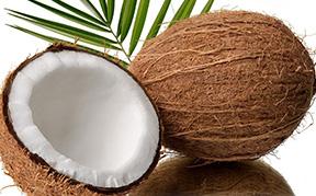 coconut-icon.jpg