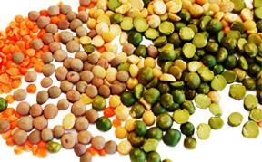 lentils-icon.jpg