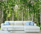 Birch Tree Forest Wall Mural