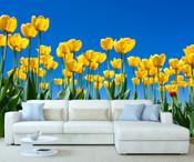 Yellows Tulips Wall Mural