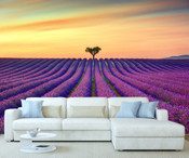 Field of Lavender Flowers Wall Mural