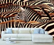 African Safari Zebra Wall Mural