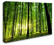 Sunlight Forest Wall Art Canvas