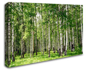 Birch Tree Forest Wall Art Canvas