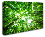 Forest Tree Top View to Sky Wall Art Canvas 8998-1013