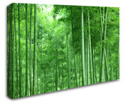 Tall Bamboo Forest Trees Wall Art Canvas