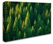 Evergreen Tree Forest Wall Art Canvas 8998-1017