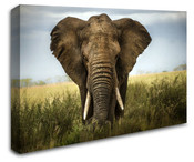 Africa Safari Elephant Wall Art Canvas 8998-1108