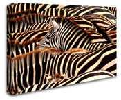 Africa Safari Zebras Wall Art Canvas