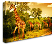 Africa Safari Giraffe Wall Art Canvas
