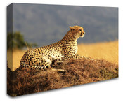 Africa Safari Cheetah Wall Art Canvas 8998-1111
