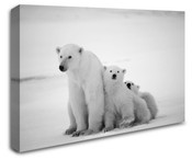 Arctic Polar Bear Wall Art Canvas 8998-1114