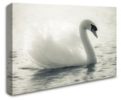 White Swan Bird Wall Art Canvas