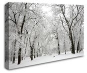 Winter Forest Trees Wall Art Canvas 8998-1028