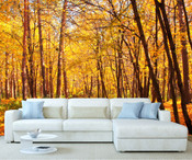 Autumn Forest Tree Wall Mural