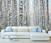 Winter Forest Birch Tree Wall Mural