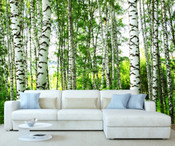 Forest Birch Trees Wall Mural