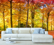 Autumn Forest Trees Wall Mural 8999-1153