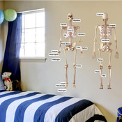 Educational Human Skeleton Wall Stickers 9113