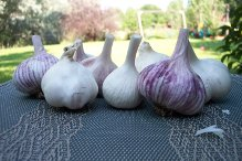 garlic-sampler.jpg