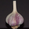 Bogatyr Garlic Premium Label
