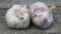 Certiffied Organic Garlic German Red