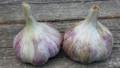 Certified Organic Garlic Corsican Red