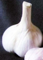 Majestic Garlic Premium Label