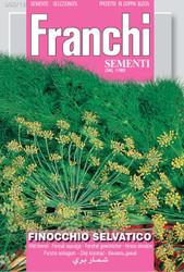 Wild Fennel (Flowering)/Finocchio Selvatico (62-18)