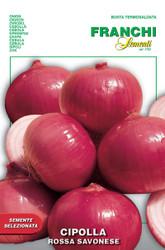 Onion Savona (42-26)