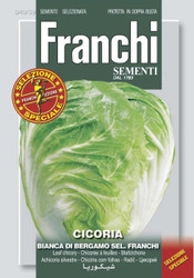 Chicory Bianca a Bergamo (40-39ME)