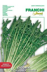 Chicory Catalogna Pugliese (V40-9)