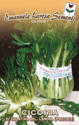 Chicory Galantina - Asparagus Chicory (40-99)