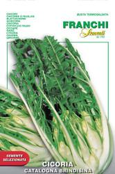Chicory Catalogna Puntarelle Brindisina (40-46)