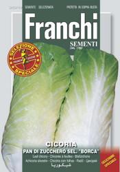 Chicory Cicoria pan di Zucchero Selezione Borca (40-49)