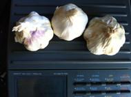 Garlic Susanville - Certified Organic