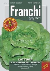 Lettuce Resistente Franchi (DBOS 79-18)