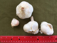 Garlic Siciliano - Certified Naturally Grown
