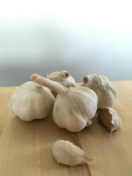 Garlic Calabrian - Hardneck