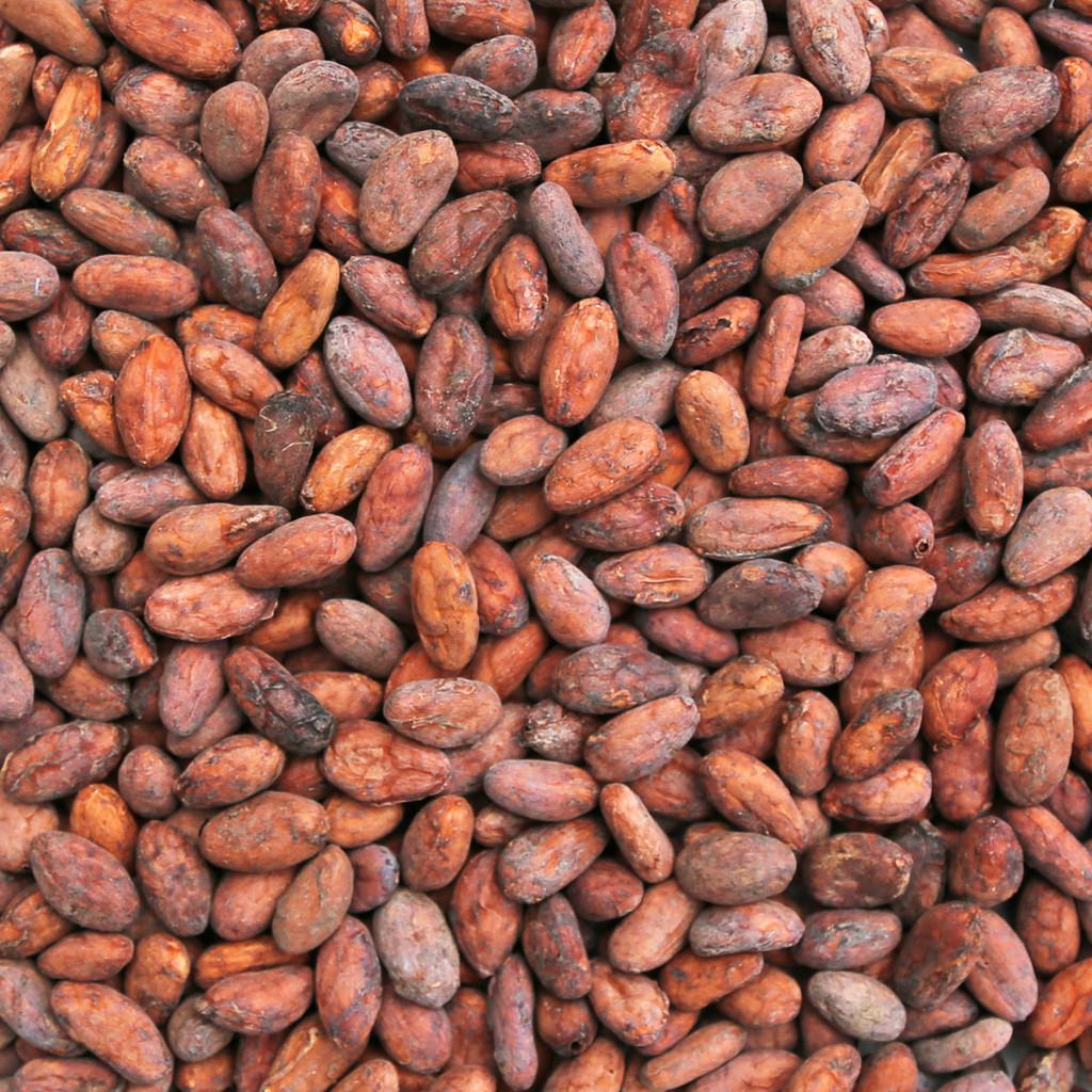 ORGANIC CACAO BEANS, whole, unpeeled, raw, 100% Arriba Criollo