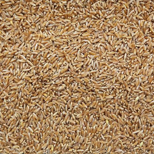 ORGANIC KAMUT (Khorasan), kernels