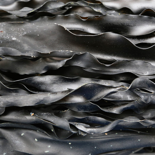 KOMBU, whole, wild harvested