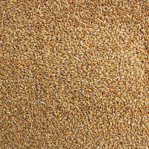 ORGANIC EINKORN WHEAT, kernels