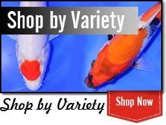 Shop by Variety